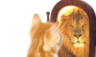 A propósito de los gatos que se creen leones en la 4T de Veracruz